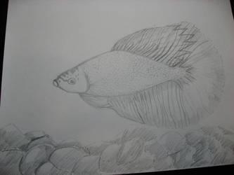 Beta Fish by cupcakecutiefriends