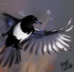 Magpie Sketch by Mondracon