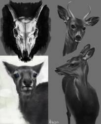 Deer Study by VaiFlow