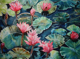 Waterlilies by p-e-a-k