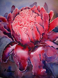 Torch Ginger by p-e-a-k