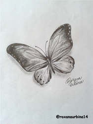 Butterfly Drawing..!! by RoxanaUrbina