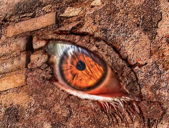 Eye in the wall - hdr by yoctox
