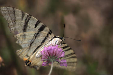 butterfly-hdr by yoctox