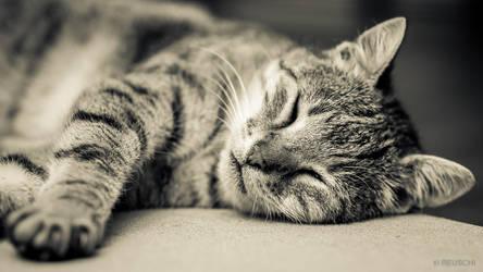 kitty by reuschi