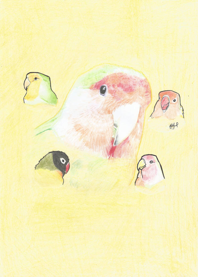 LOVEBIRDS by PhanerozoicWild
