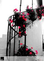 'Begonias of Life' by VisionHaus