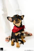 Chihuahua 1 :: Vision Haus by VisionHaus