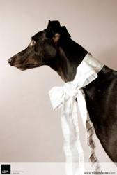 Greyhound 1 :: Vision Haus by VisionHaus