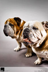 Bulldogs 2 :: Vision Haus by VisionHaus