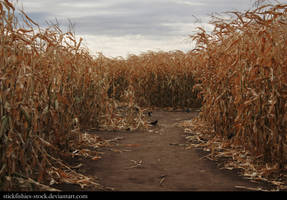 Corn Field 2 by Stickfishies-Stock