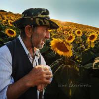 sunflower by nurtanrioven