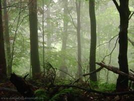 Mistic forest by DarkLadyxx