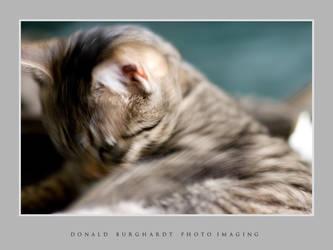 Kitty washing by fotograafdonald