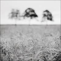 Shadows by vvolfmann