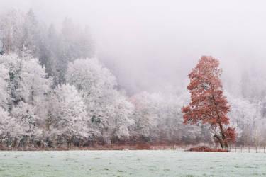Frosty landscape by JohnyG