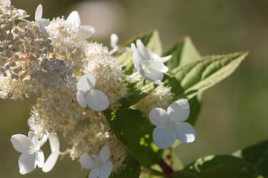 Unknown Flower by Lunarmoonlight