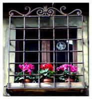 flower pots by shoogle