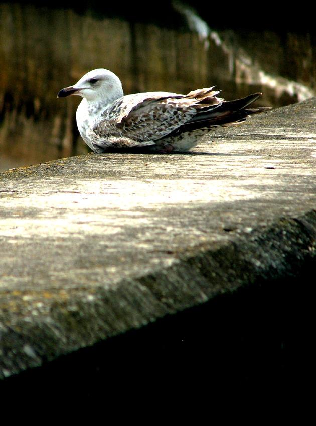 BIRDS EH by shoogle
