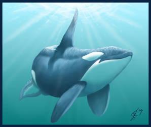 Orca by soxfox