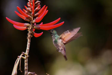Hummingbird by Blackmattetoro