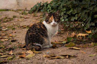 Autumn's cat by g4l4d4n