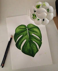 Watercolor - Swiss Cheese Plant! by Beginneratart