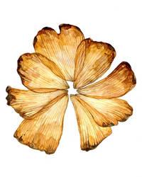 Petals by Kyla-Nichole