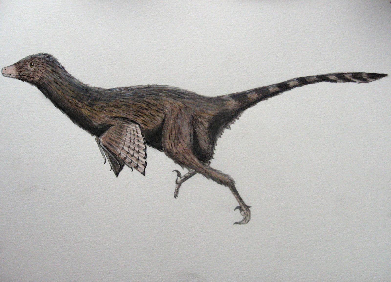 Dromaeosaurus albertensis by Oddity-1991