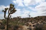 Desert Forest by cerberus144
