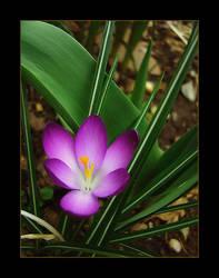 Springtime memory iii by alpenglow