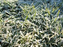 Dawn Frost by Zelandeth