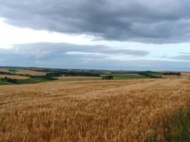 Barley In The Breeze by Zelandeth