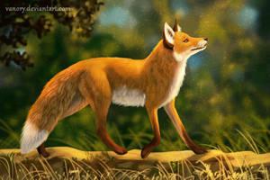 Foxwalk by Vawie-Art