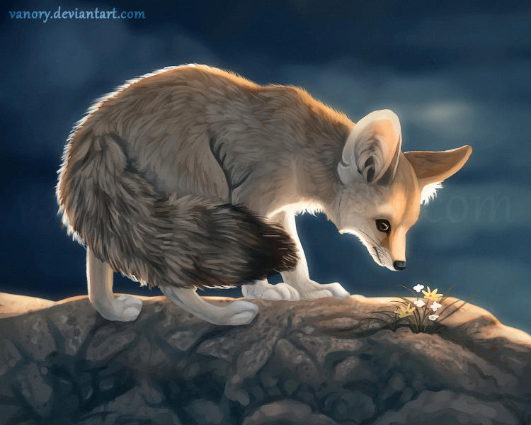 Fennec Fox by Vawie-Art