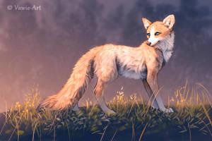 Morning Light by Vawie-Art