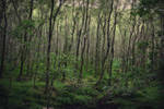 irish forest by apfelgriebs