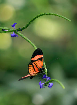 Butterfly Stock 15 by NellyGraceNG