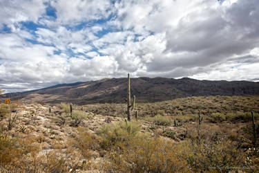 Saguaro National Park by Mac-Wiz