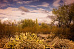 Saguaro National Park-3 by Mac-Wiz
