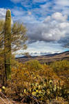 Saguaro National Park-2 by Mac-Wiz