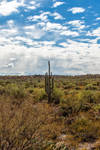 The Lonely Saguaro by Mac-Wiz