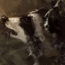 raccoon by racoonwolf