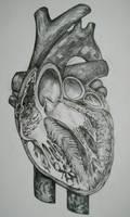 Gray Heart by InterstellarAlsatian