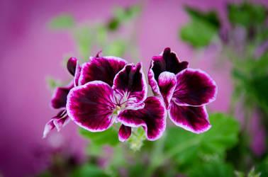 Flower by noiser84