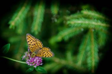 Butterfly 2 by noiser84