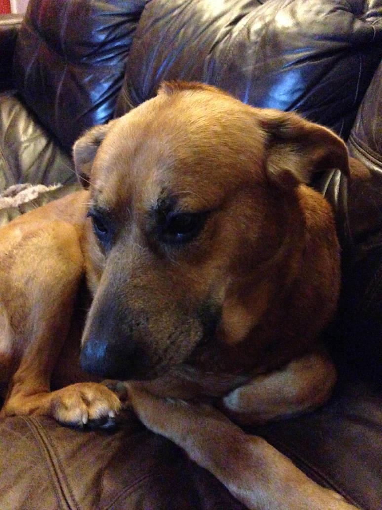 My dog has cancer by Pinkamena-Diane-Pies