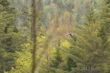 Eagle 8 by butticorn