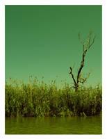 dead tree by jackie-kaydo