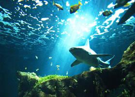 Shark by flemmens